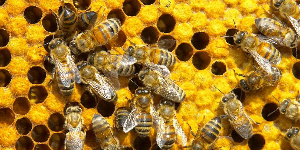 Včelařský